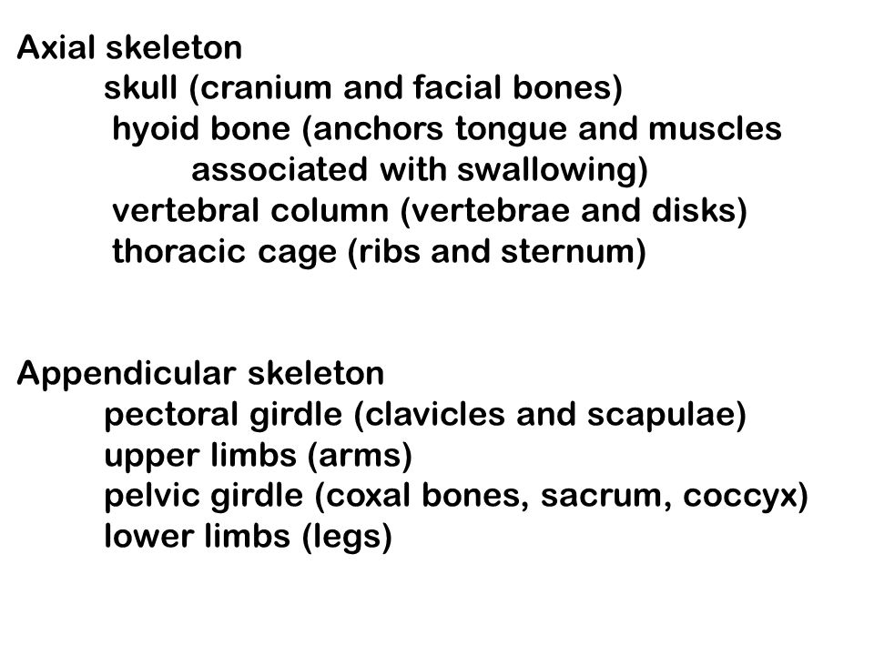 Axial skeleton skull (cranium and facial bones) hyoid bone (anchors tongue and muscles. associated with swallowing)