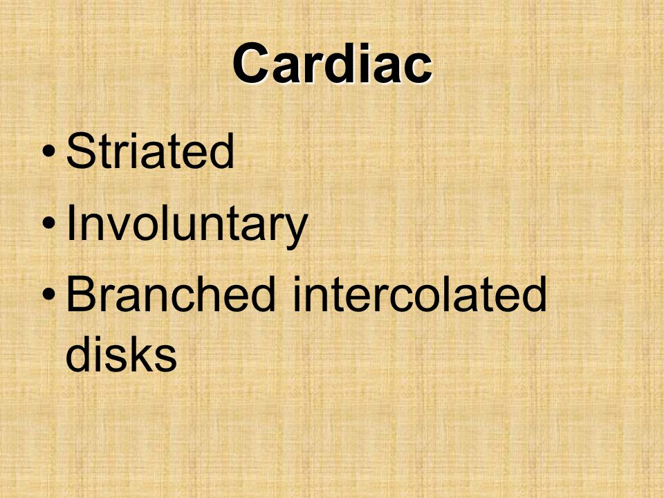 Cardiac Striated Involuntary Branched intercolated disks