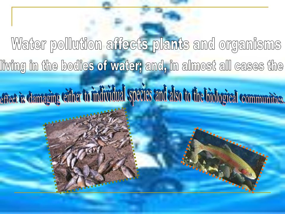 Water pollution affects plants and organisms