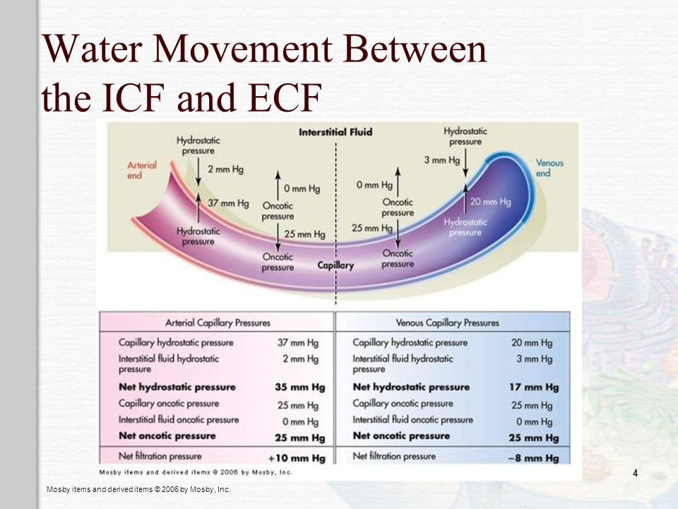 Water Movement Between the ICF and ECF