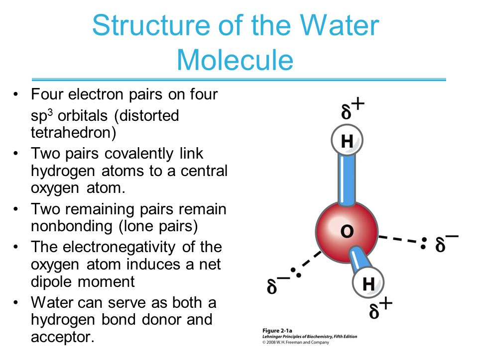 Water structure & properties | molecule & physical properties | a.