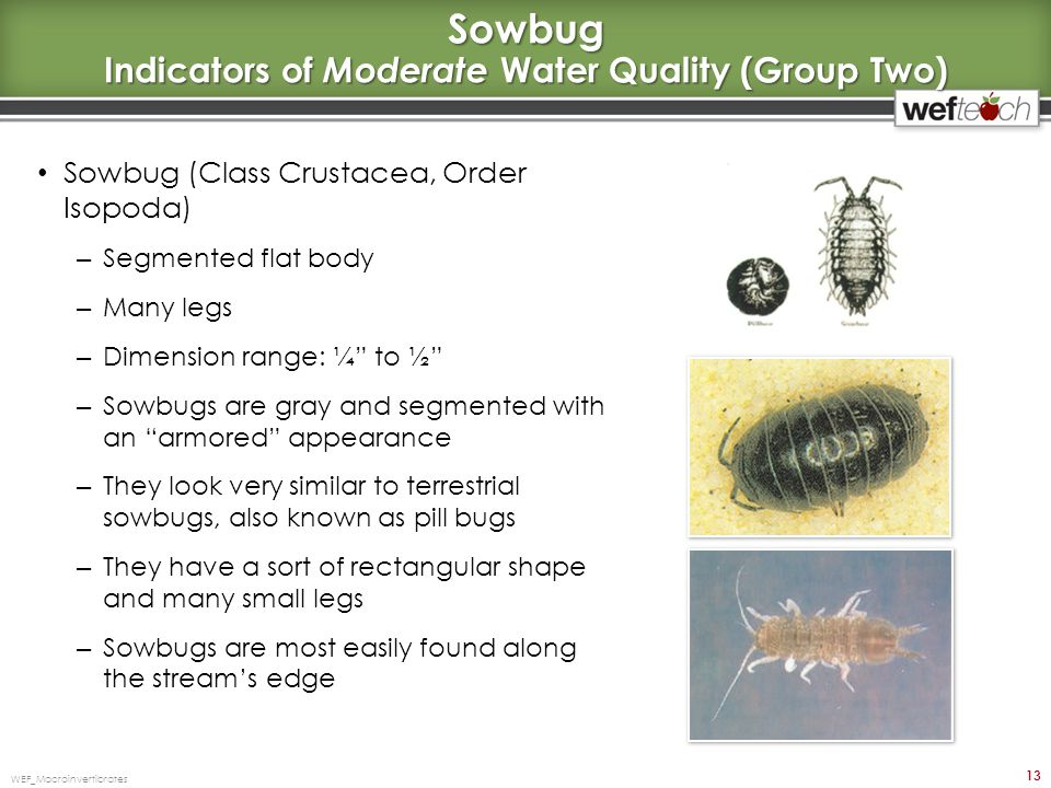 Sowbug Indicators of Moderate Water Quality (Group Two)