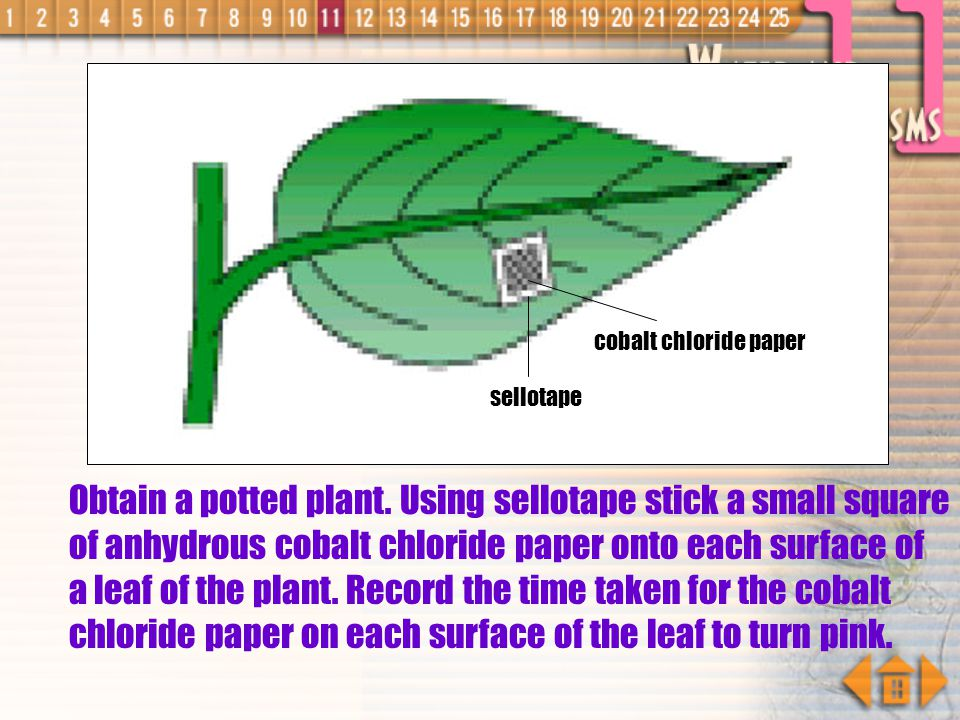 Obtain a potted plant. Using sellotape stick a small square