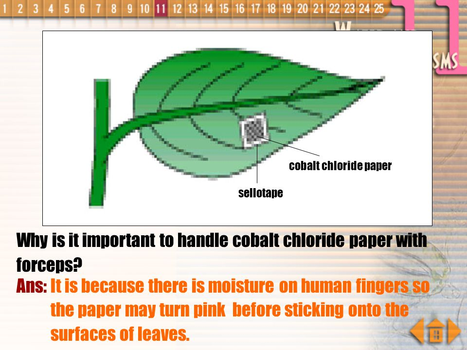 Why is it important to handle cobalt chloride paper with forceps