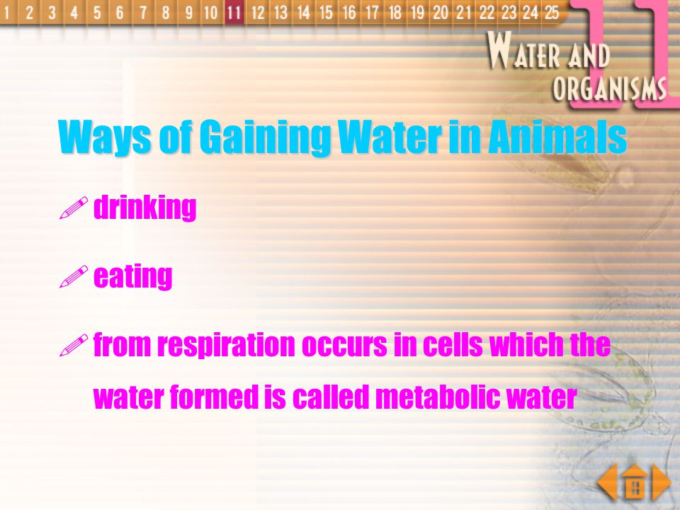 Ways of Gaining Water in Animals