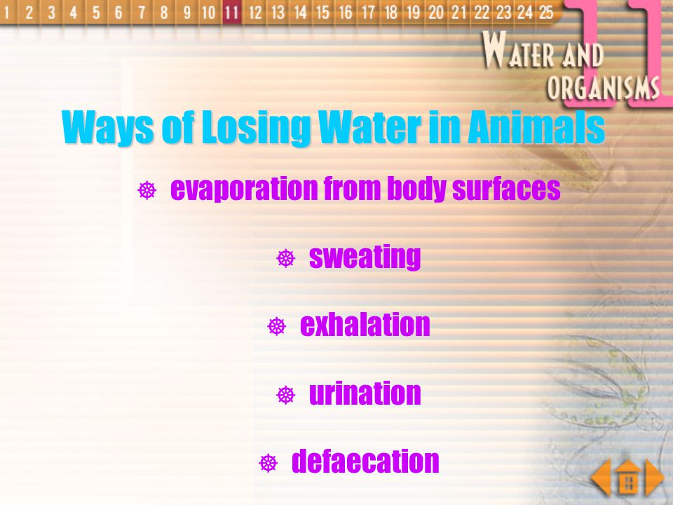 Ways of Losing Water in Animals