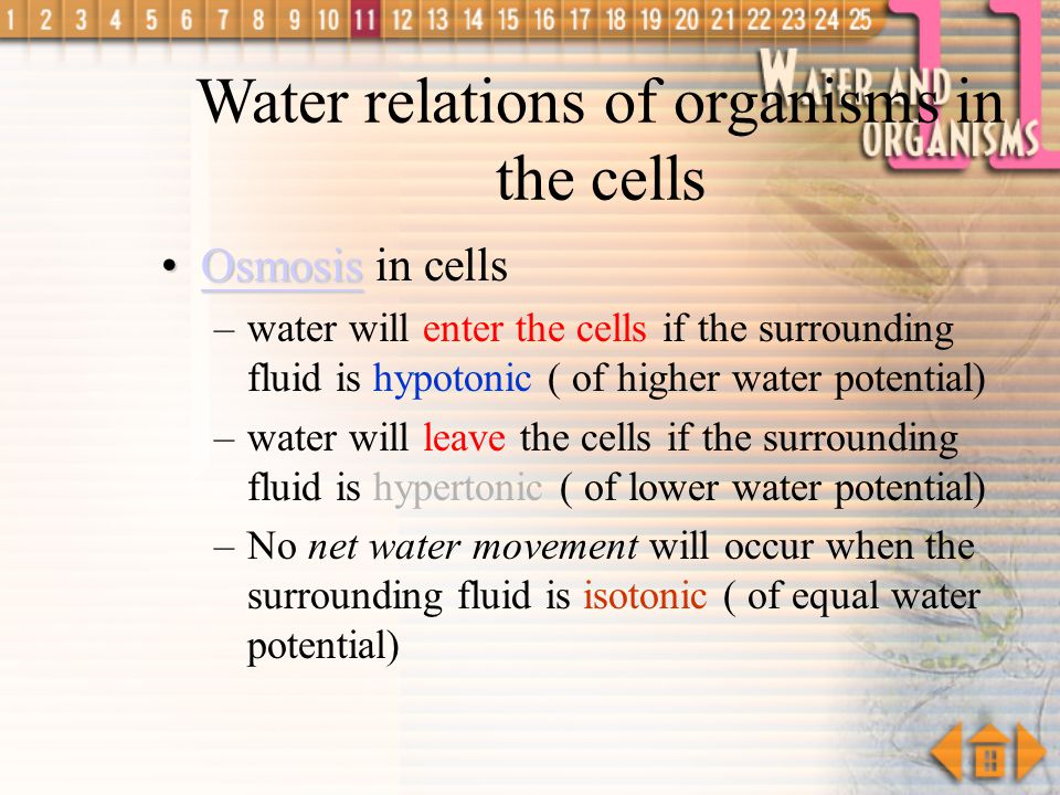 Water relations of organisms in the cells