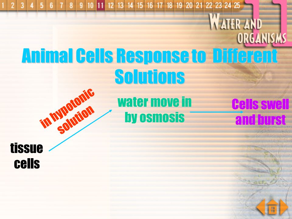 Animal Cells Response to Different Solutions