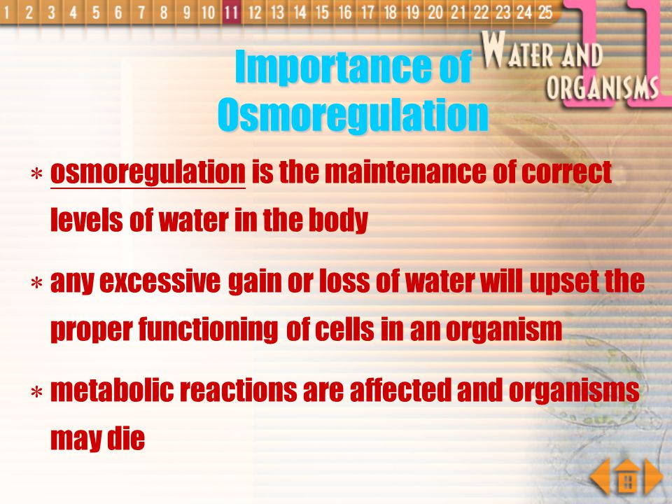 Importance of Osmoregulation