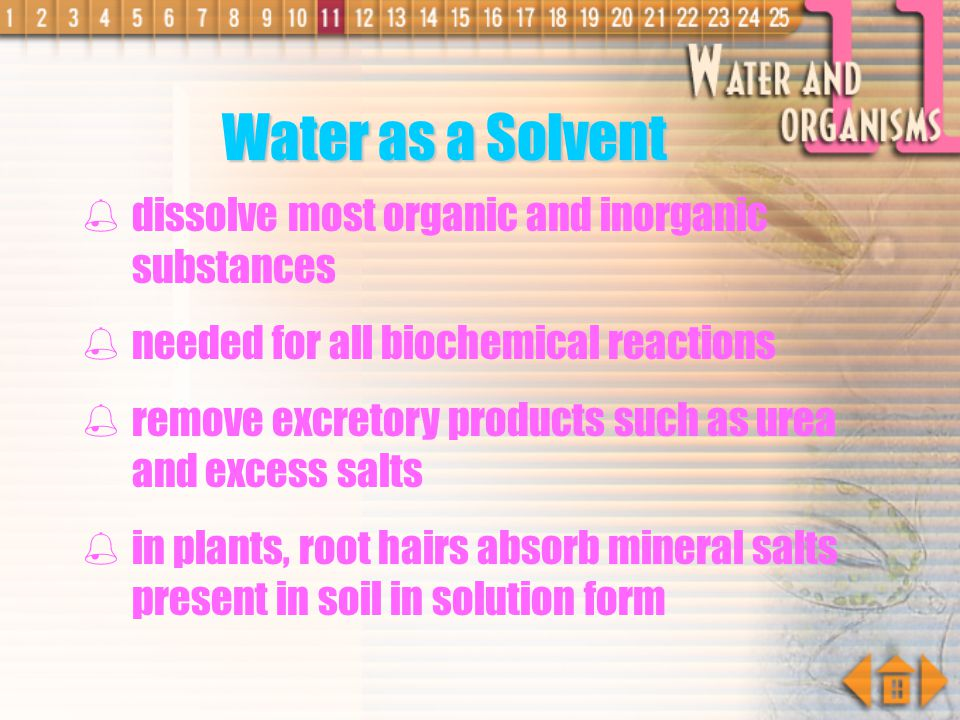 Water as a Solvent dissolve most organic and inorganic substances