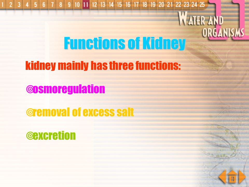 Functions of Kidney kidney mainly has three functions: osmoregulation