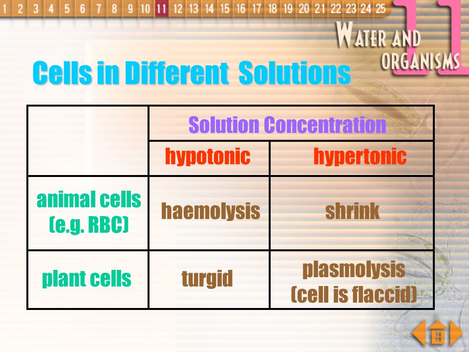 Cells in Different Solutions