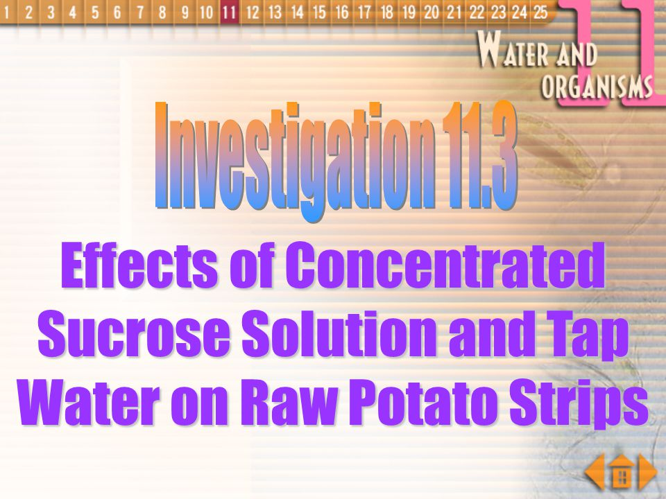 Investigation 11.3 Effects of Concentrated Sucrose Solution and Tap Water on Raw Potato Strips