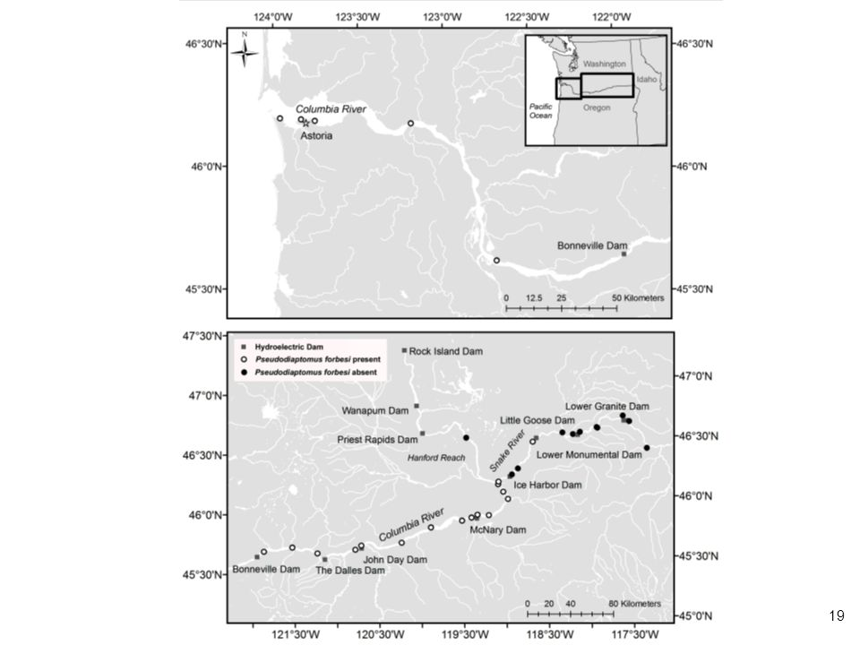 Upper map shows stations for zooplankton sampled from lower Columbia River docks by WSU Vancouver (S. Bollens). Note presence of Pseudodiaptomus forbesi at all stations