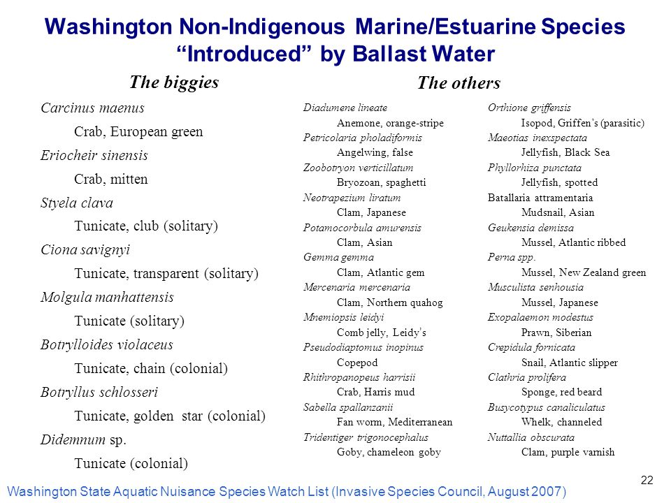 Washington Non-Indigenous Marine/Estuarine Species Introduced by Ballast Water