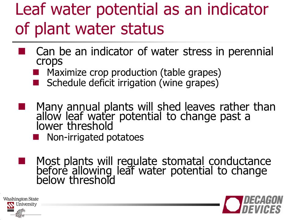 Leaf water potential as an indicator of plant water status