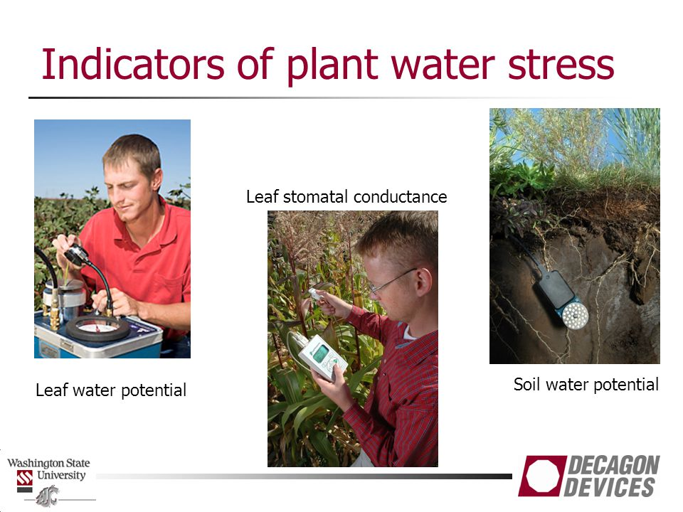 Indicators of plant water stress