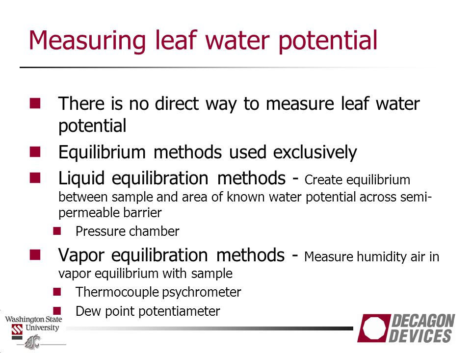 Measuring leaf water potential
