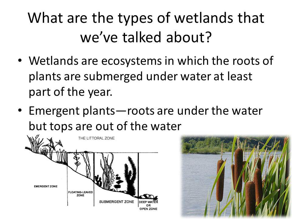 What are the types of wetlands that we've talked about
