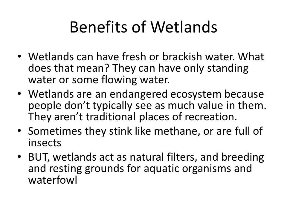 Benefits of Wetlands Wetlands can have fresh or brackish water. What does that mean They can have only standing water or some flowing water.