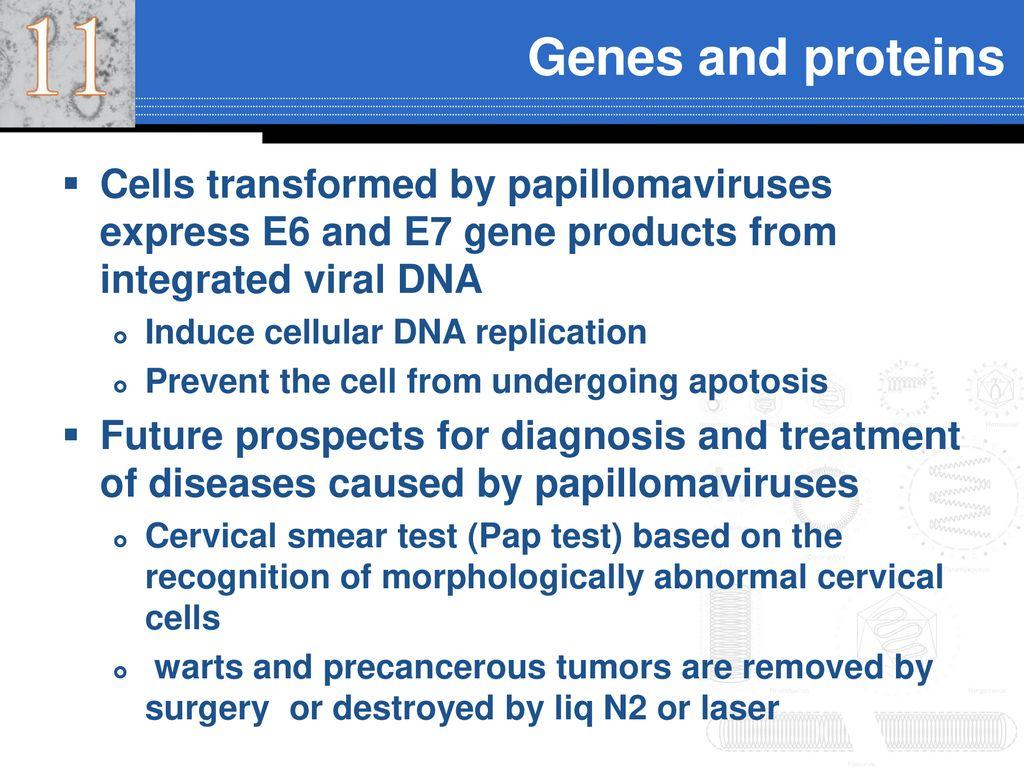 Papillomaviridae ppt, High risk hpv causes cancer