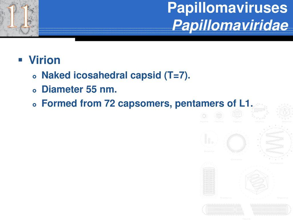 papillomaviridae osztályozás