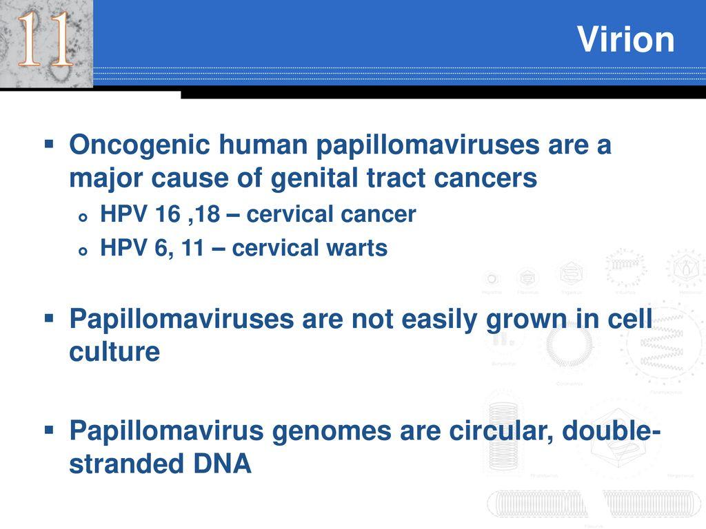 papillomavírus 16 18 milyen gyógyszert igyon a férgek megelőzésére