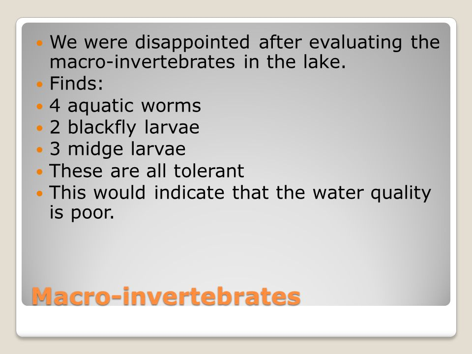 We were disappointed after evaluating the macro-invertebrates in the lake.