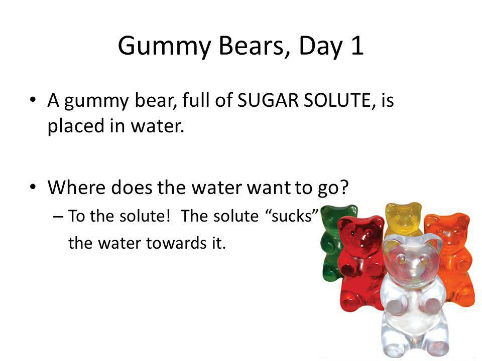 Gummy Bears, Day 1 A gummy bear, full of SUGAR SOLUTE, is placed in water. Where does the water want to go
