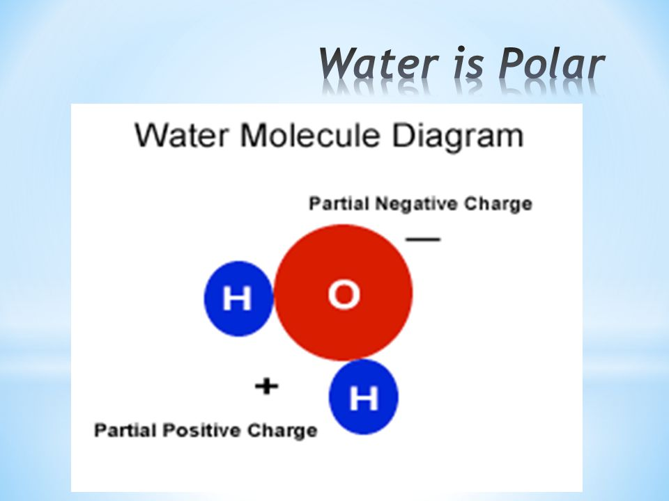 Water is Polar