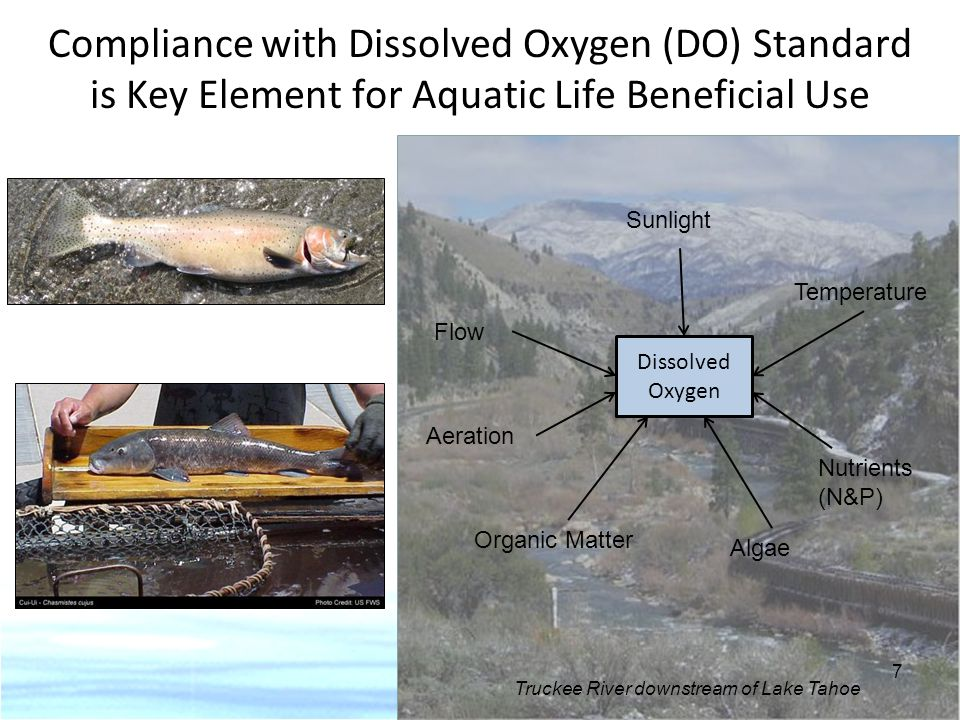 Compliance with Dissolved Oxygen (DO) Standard is Key Element for Aquatic Life Beneficial Use