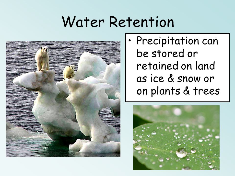 Water Retention Precipitation can be stored or retained on land as ice & snow or on plants & trees