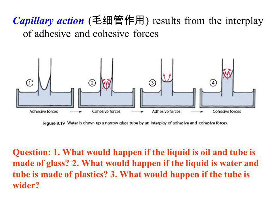 Capillary action (毛细管作用) results from the interplay of adhesive and cohesive forces