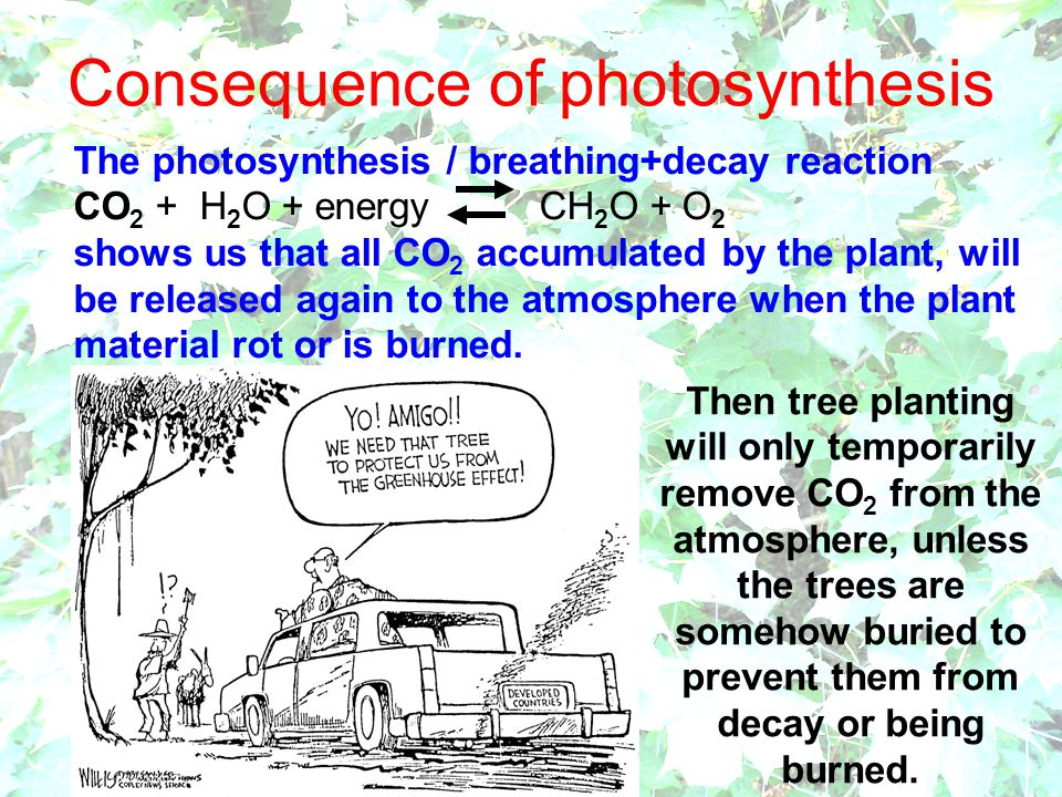 Consequence of photosynthesis