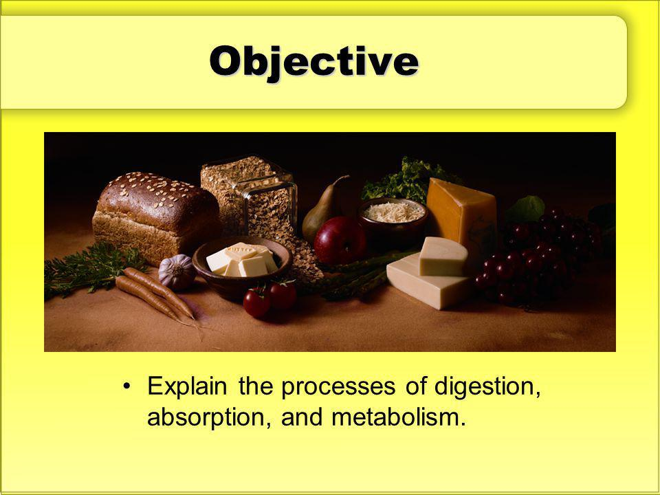 Objective Discuss: What can you do to help your body digest foods and use the nutrients they provide