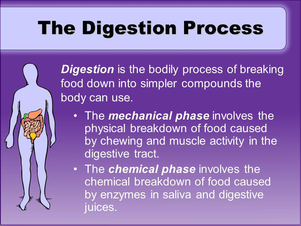 The Digestion Process Digestion is the bodily process of breaking food down into simpler compounds the body can use.