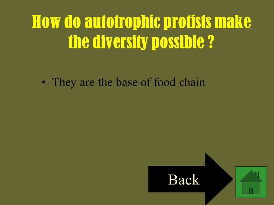 How do autotrophic protists make the diversity possible