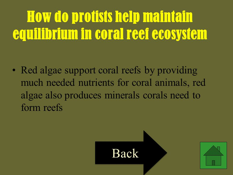 How do protists help maintain equilibrium in coral reef ecosystem