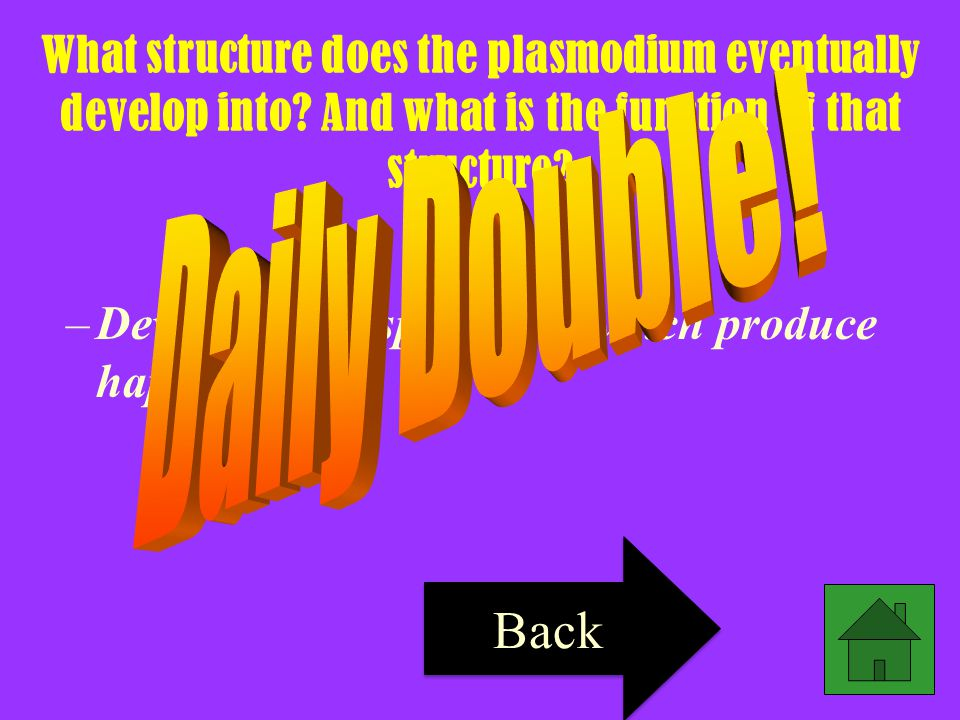 What structure does the plasmodium eventually develop into