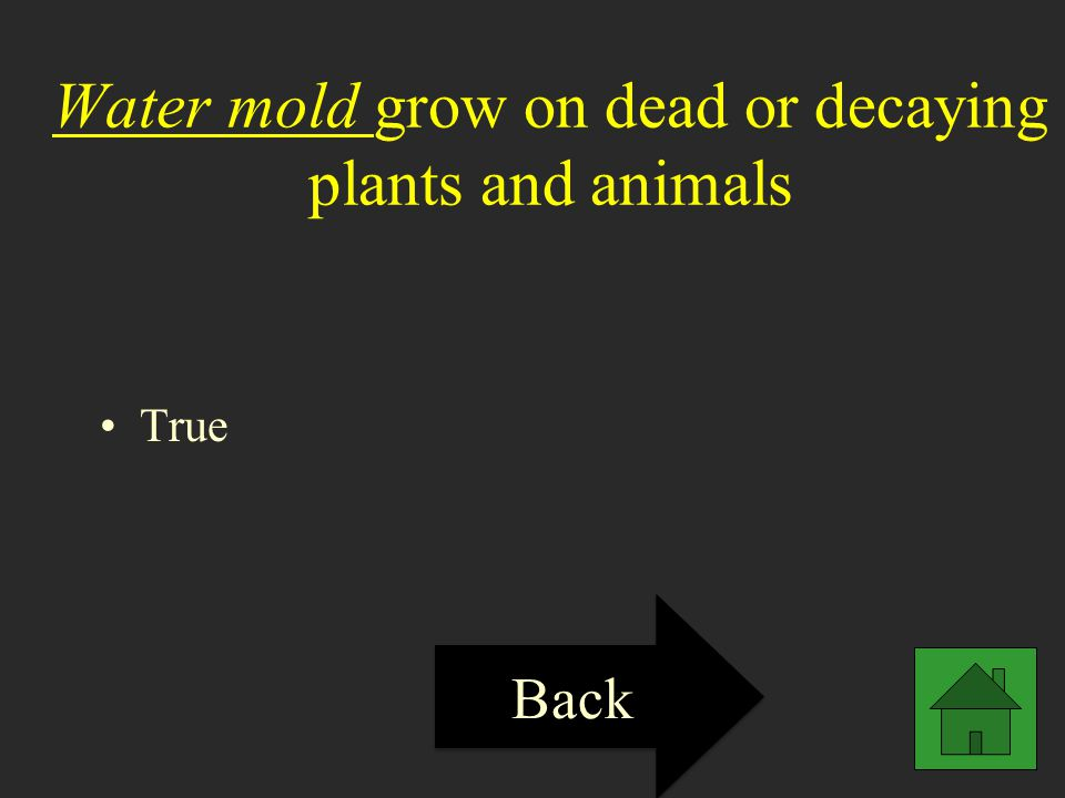 Water mold grow on dead or decaying plants and animals