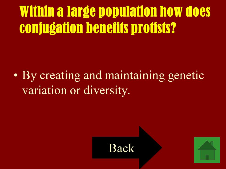 Within a large population how does conjugation benefits protists