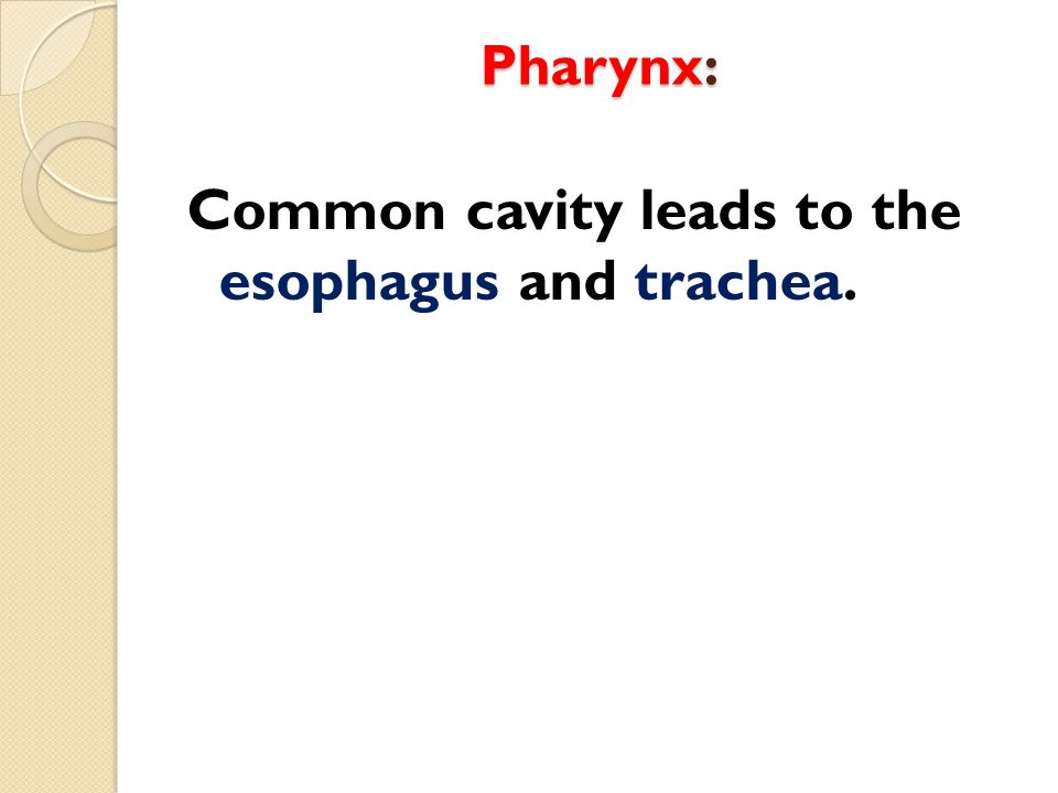 Common cavity leads to the esophagus and trachea.