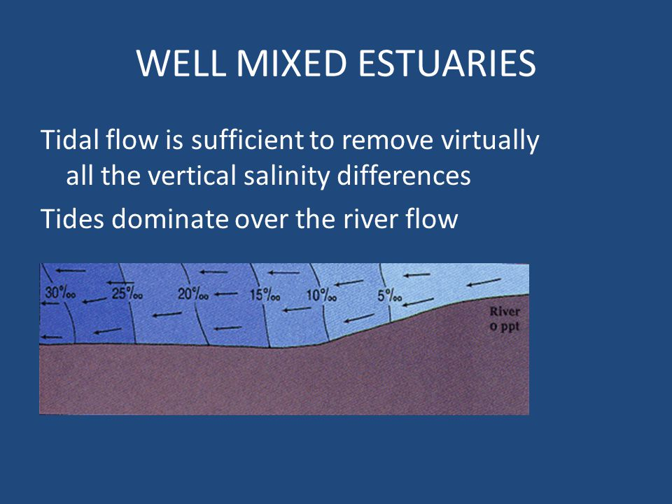 WELL MIXED ESTUARIES Tidal flow is sufficient to remove virtually all the vertical salinity differences Tides dominate over the river flow