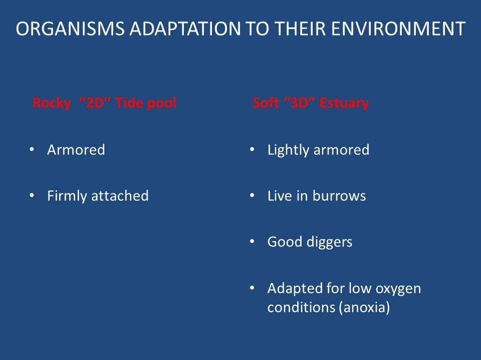 ORGANISMS ADAPTATION TO THEIR ENVIRONMENT
