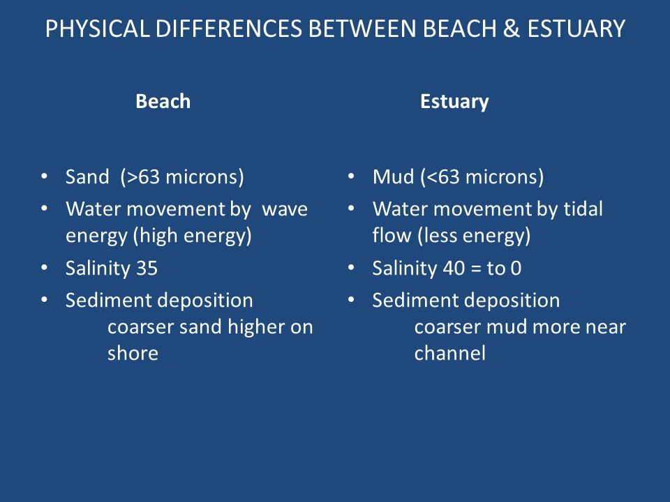 PHYSICAL DIFFERENCES BETWEEN BEACH & ESTUARY