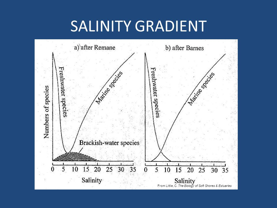 SALINITY GRADIENT From Little, C. The Biology of Soft Shores & Estuaries