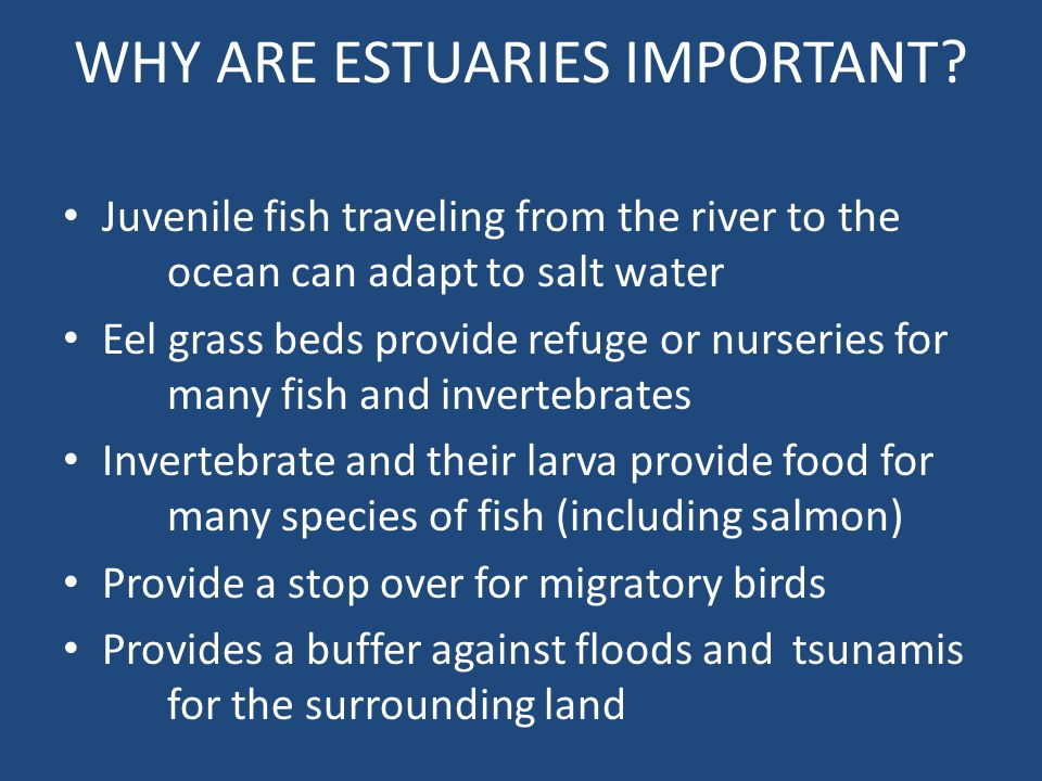 WHY ARE ESTUARIES IMPORTANT