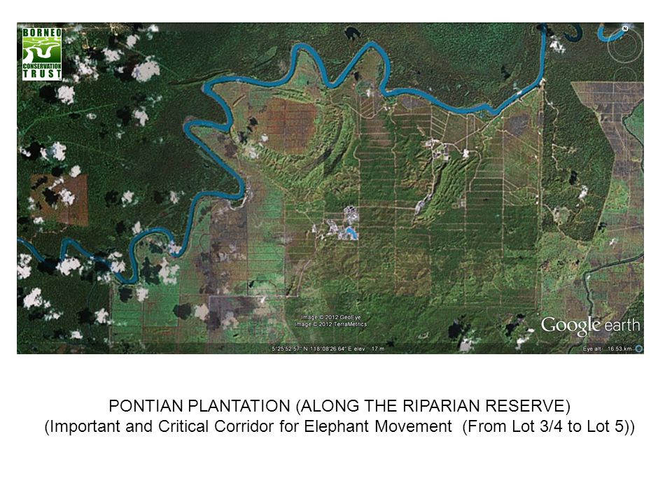 PONTIAN PLANTATION (ALONG THE RIPARIAN RESERVE)