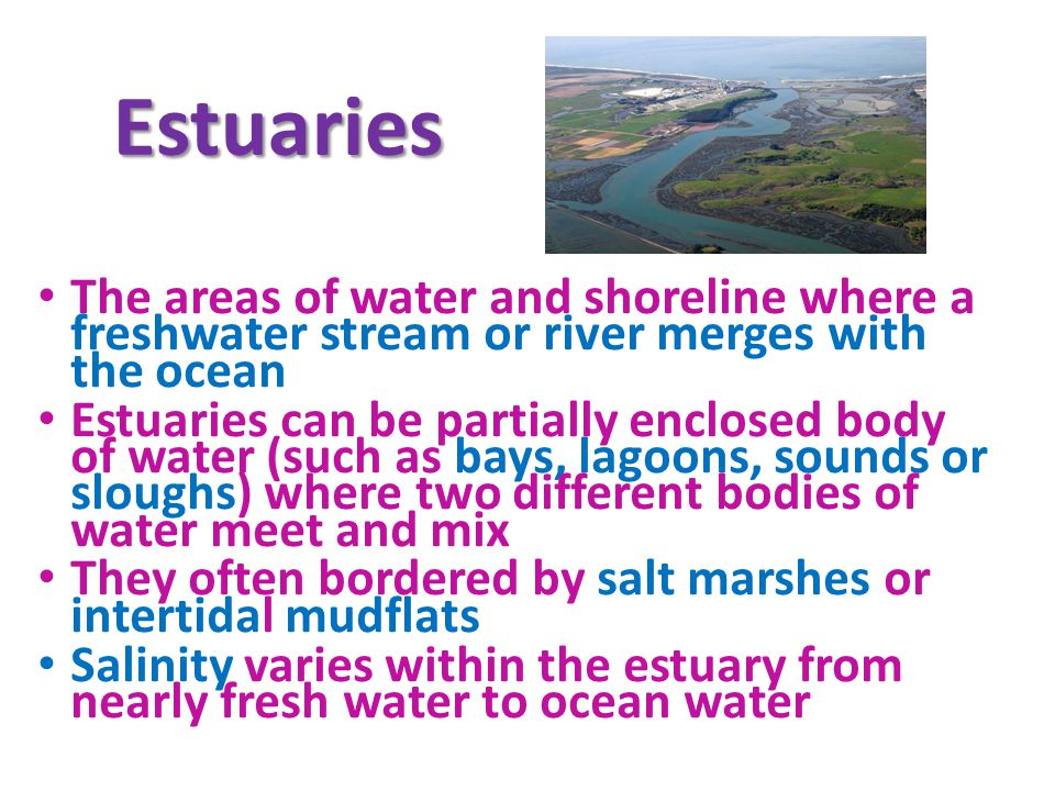 Estuaries The areas of water and shoreline where a freshwater stream or river merges with the ocean.