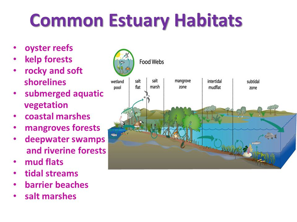 2014 Water Quality Bc Marine Estuary Ppt Video Online Download